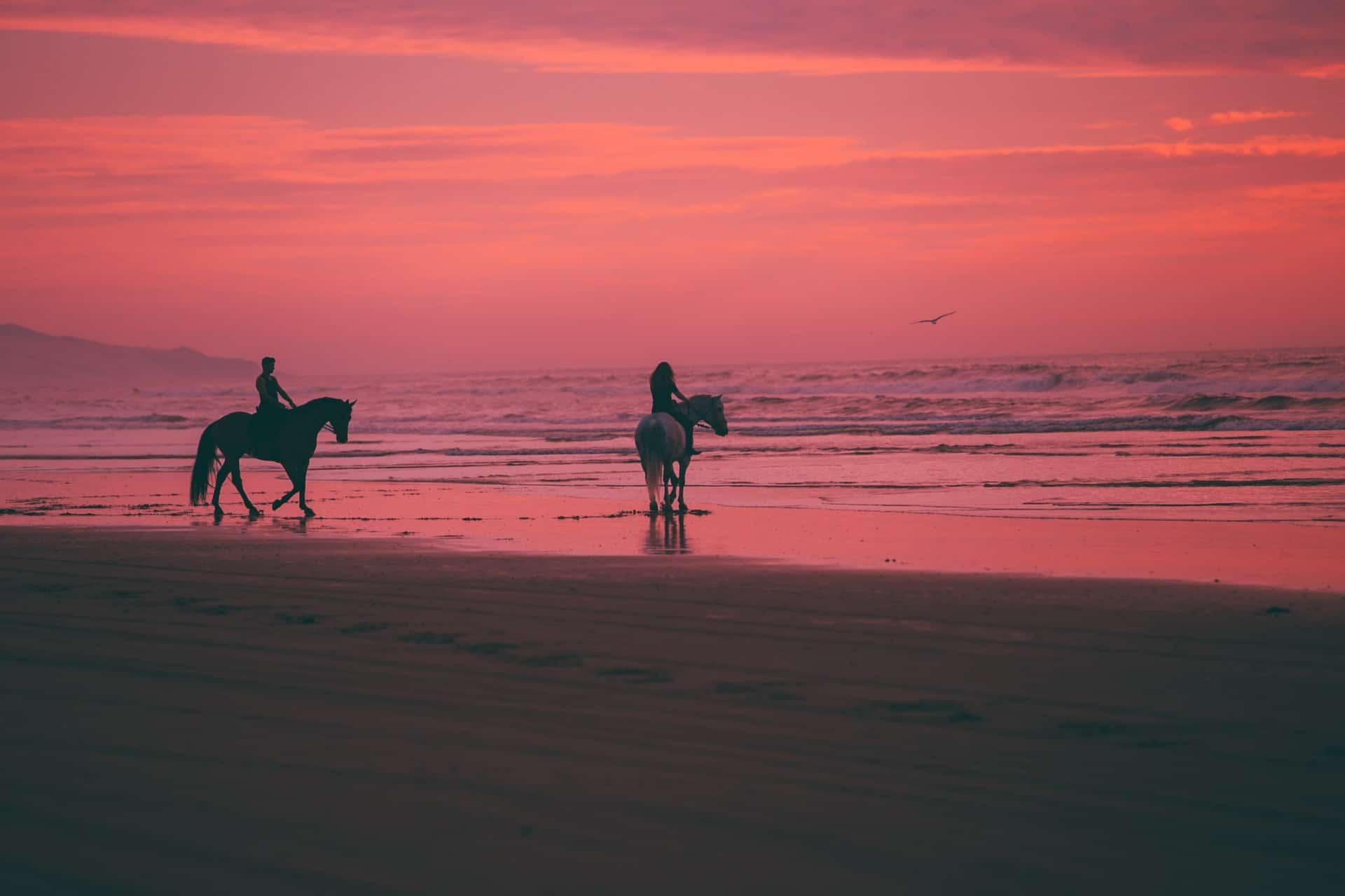 Die besten Pferdefilme und Serien
