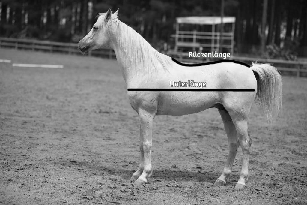 Pferdedecken Größe bestimmen